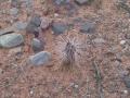 Uquía - Kaktus am Wegesrand