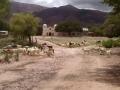 Hornaditas - ovejas, cabras, campo de fútbol y iglesia