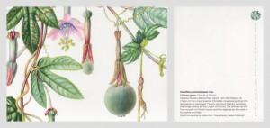 20160710-18Passiflora