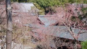 DSCN3347-Japanreise