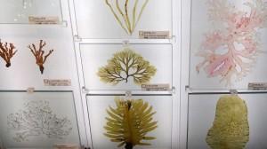 DSCN3620-TokyoNaturmuseum